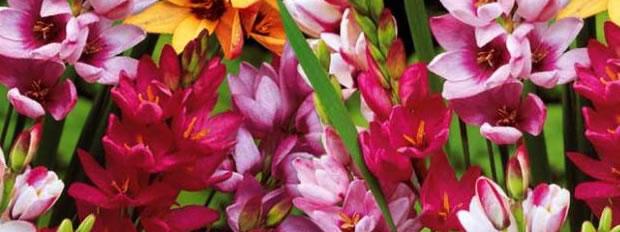 Commande de fleurs pour mon jardin